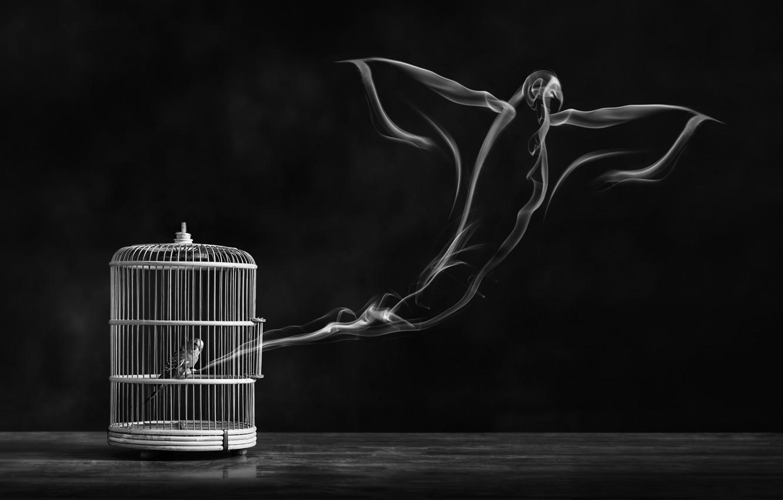 Фото обои свобода, птица, клетка, bird, freedom, cage, Alaa Al-Shurafa