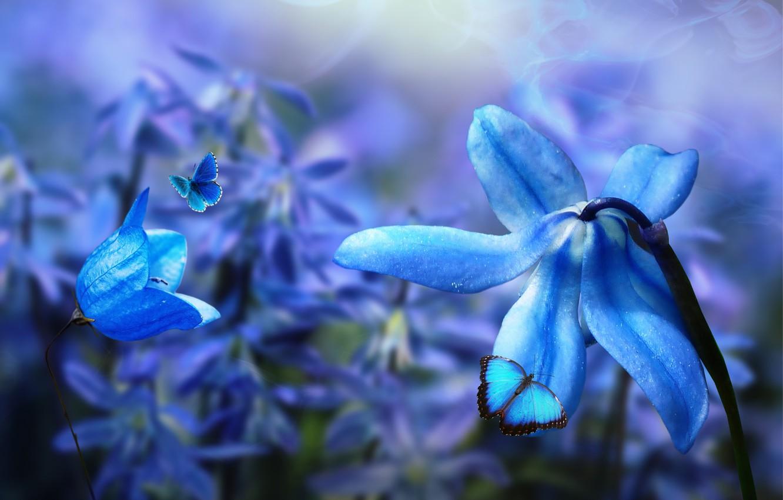 Фото обои бабочки, цветы, природа, коллаж, digital art