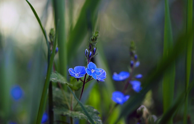 Фото обои цветок, трава, макро, фото, боке