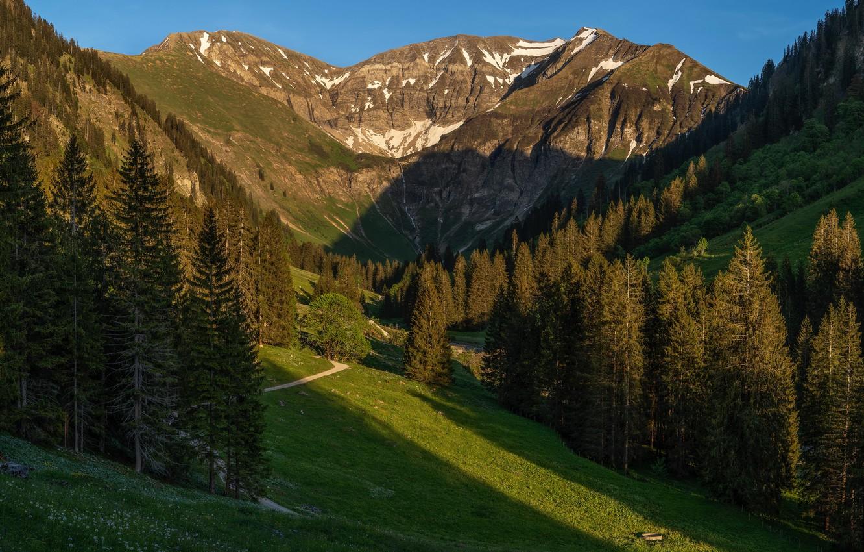 Фото обои лес, солнце, деревья, горы, тропа, Германия, Бавария, Альпы, ущелье