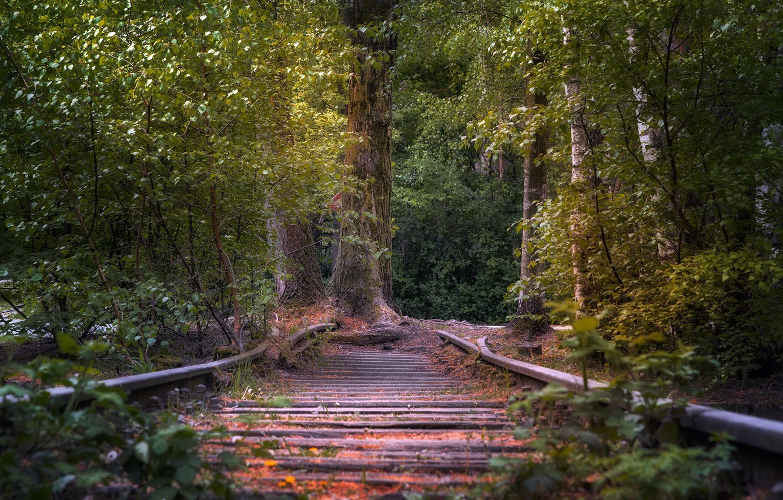 Фото обои лес, дерево, железная дорога