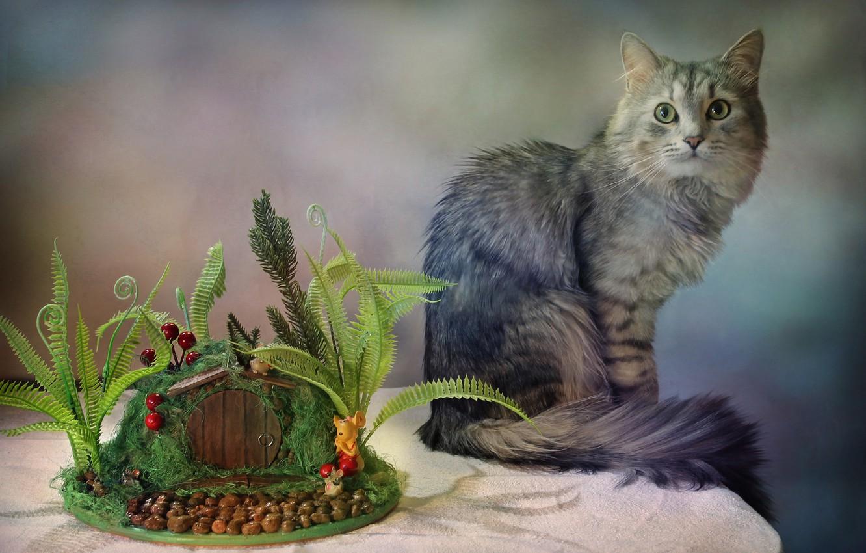Фото обои кот, стол, животное, Ковалёва Светлана, Светлана Ковалёва, топиарий