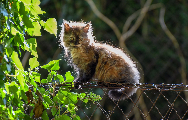 Фото обои кошка, листья, забор, пушистый, котёнок, котейка