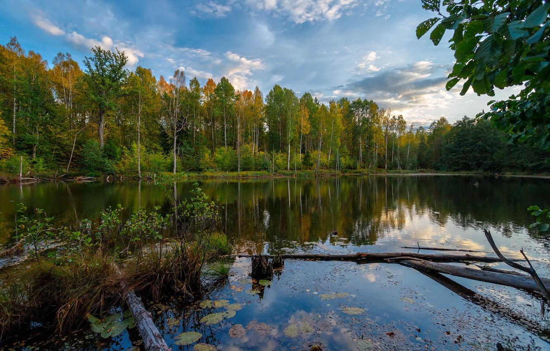 Фото обои осень, лес, пейзаж, природа, озеро, отражение