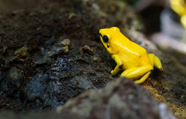 Фото обои frog, moss, moisture, yellow frog