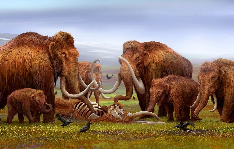 Фото обои Кости, Арт, Слоны, Скелет, Труп, Прощание, Вороны, Мамонт, Мамонты, Бивни, Mammoths, Детеныши, Древние животные