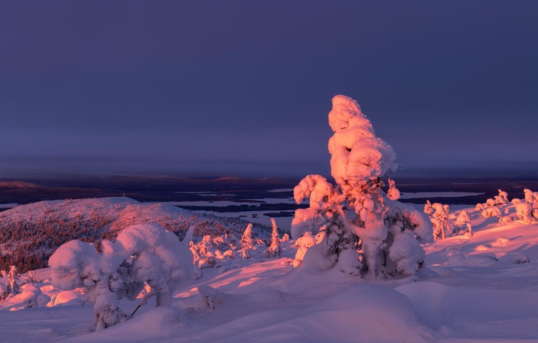 Фото обои зима, снег, деревья, пейзаж, закат, природа, ели, Максим Евдокимов