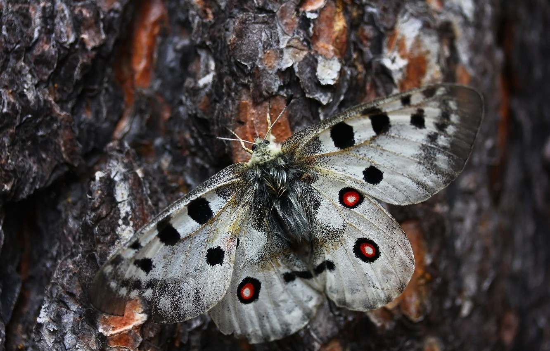 Фото обои макро, дерево, бабочка