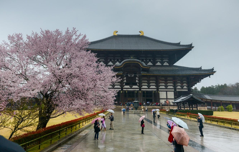 Фото обои Сакура, Япония, Japan, Архитектура, Sakura, Nara, Нара, Architecture