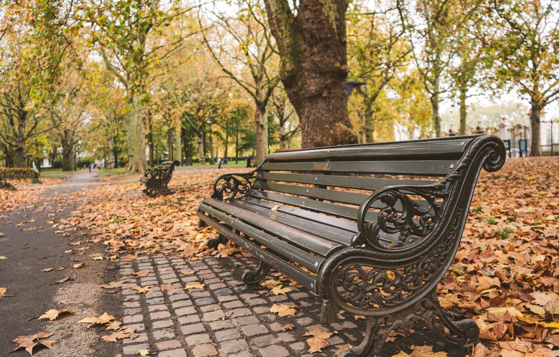 Фото обои осень, листья, деревья, скамейка, парк, nature, park, autumn, leaves, tree, bench