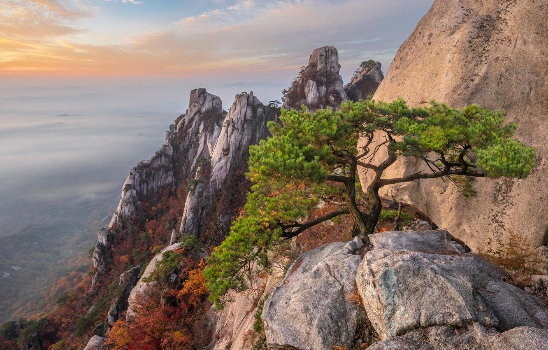 стала фаворитом дерево в скале картинки однотонные цветы