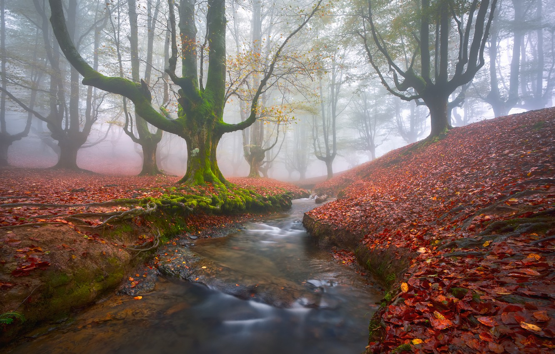 Фото обои осень, лес, деревья, туман, ручей, листва, мох, дымка, Испания