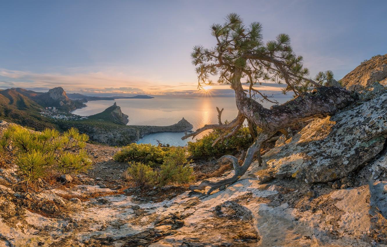 Фото обои море, деревья, пейзаж, закат, природа, камни, скалы, побережье, сосны, Крым, Новый Свет