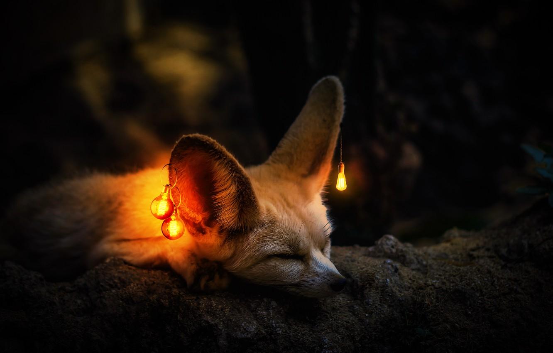 лиса с лампой картинка