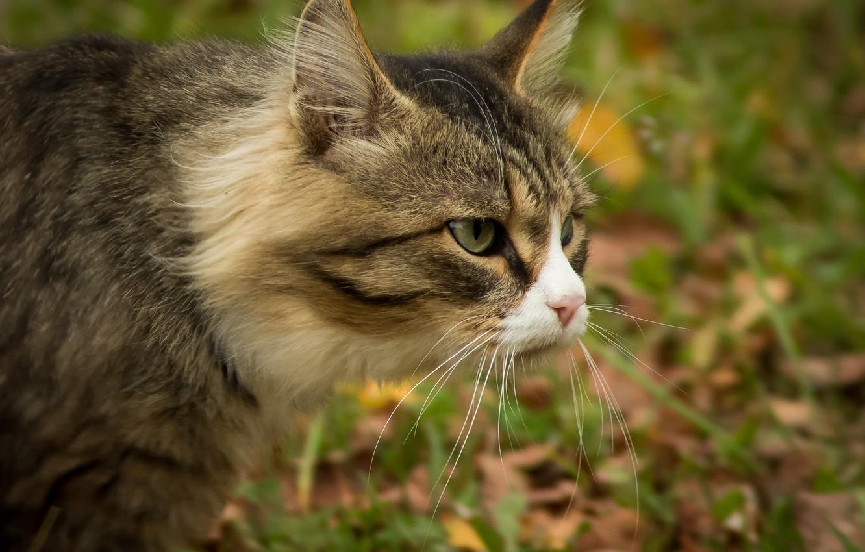 Фото обои кот, взгляд, мордочка, профиль, котэ, котофеич, Дмитрий Суслов