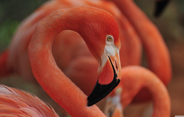 Фото обои bird, flamingo, flamingo nest sleep