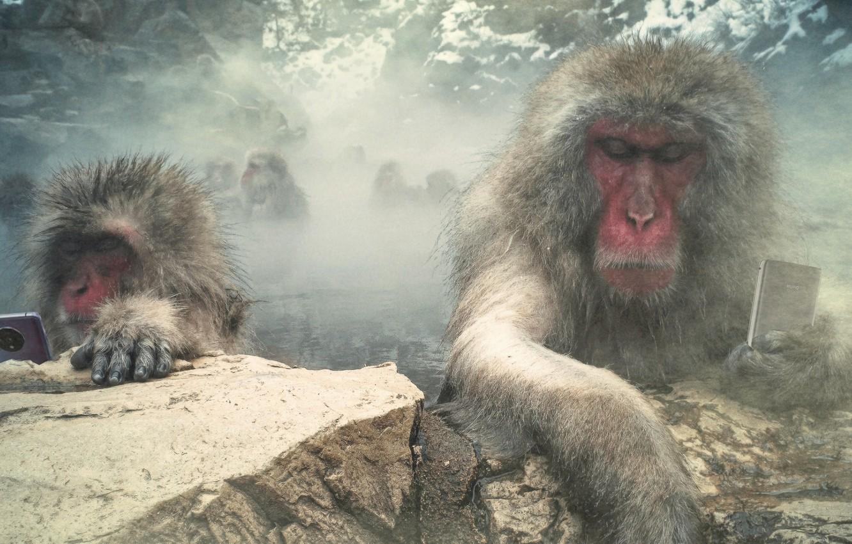 Фото обои monkey, bath, tech, funny, phone, humor, media, connected