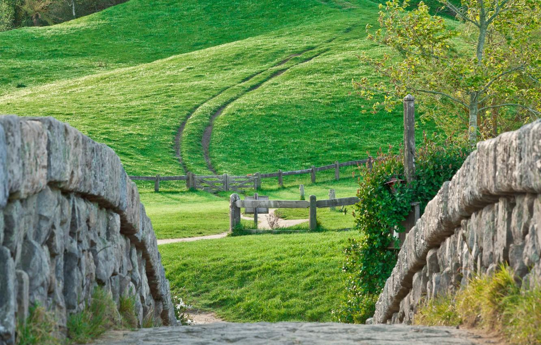 Фото обои wall, grass, Nature, road, landscape, tree, hill, stones, plants, meadow, path, dirt road