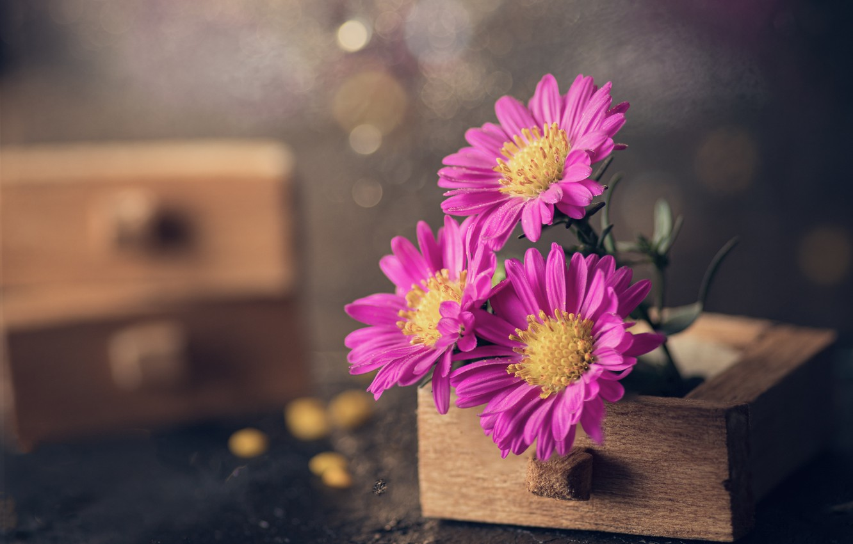 Фото обои макро, цветы, лепестки, боке, ящички