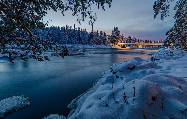 Фото обои lights, forest, river, bridge, night, winter