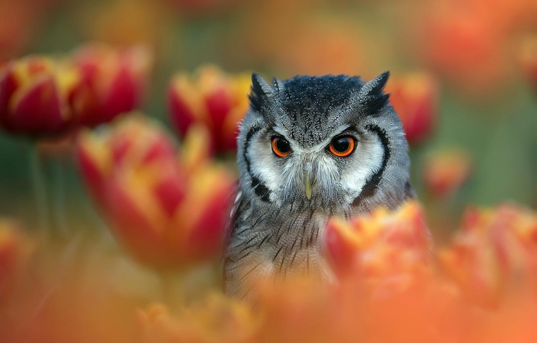 Фото обои цветы, природа, птица