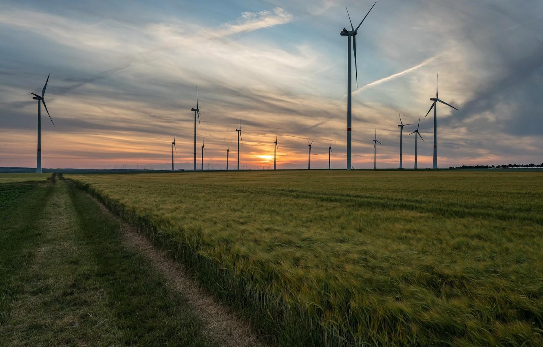 Фото обои поле, закат, ветряки