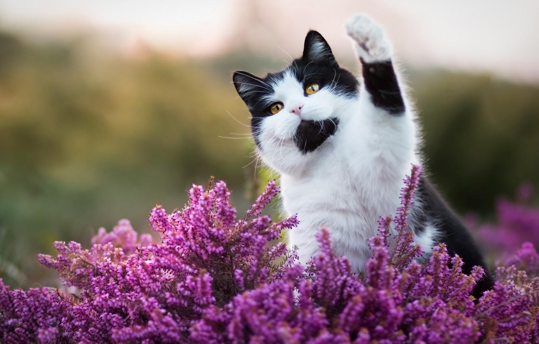 Обои поза, боке, черно-белый, природа, кот, лежит, лето, Кошка, фон, морда, отдых, чёрный, Котя, Kote, желтые глаза, зелены, трава. Кошки foto 7