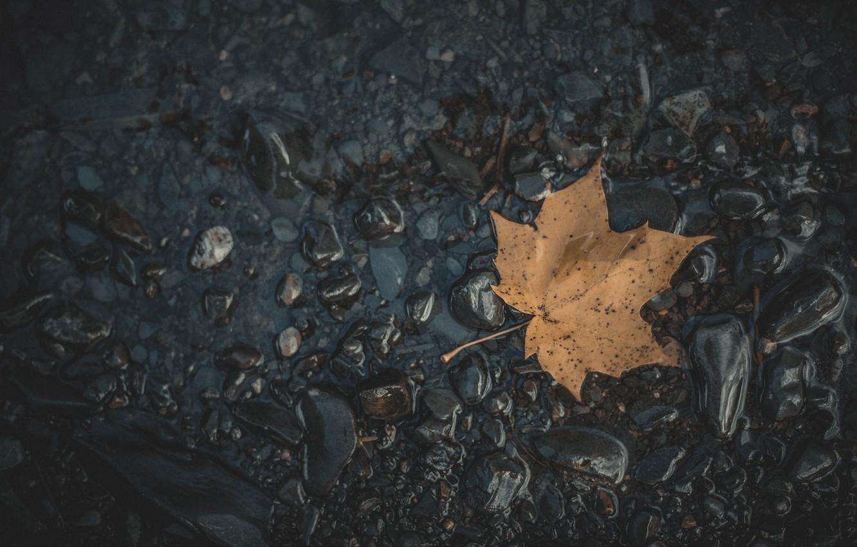Фото обои природа, macro, вода и лист