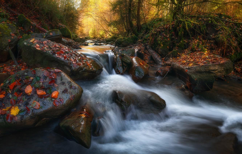 Фото обои осень, лес, листья, природа, камни, порог, речушка