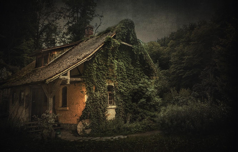 Фото обои природа, сумерки, старый дом, плющ