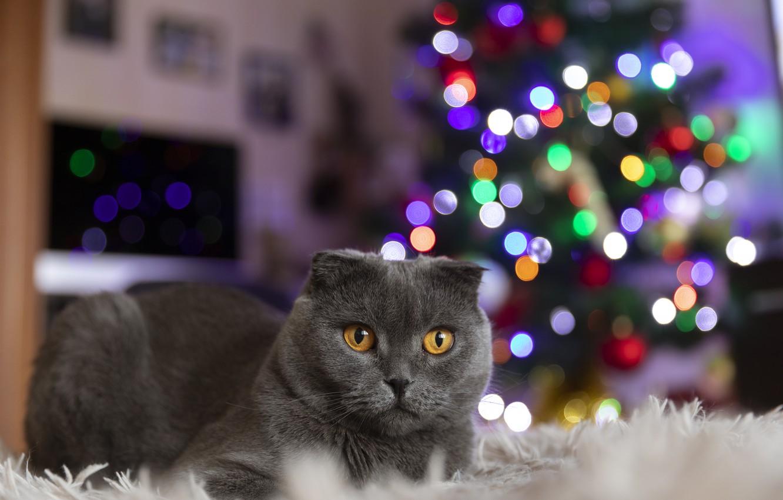 Фото обои кот, новыйгод, елка гирлянды огни