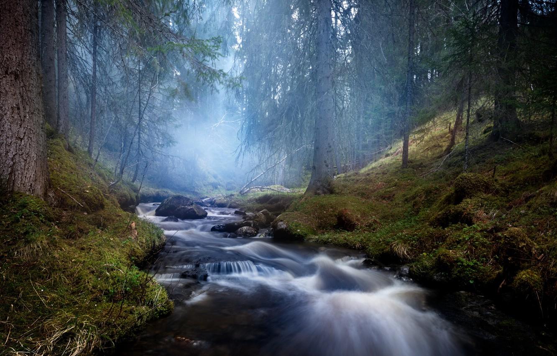 Фото обои лес, природа, туман, река