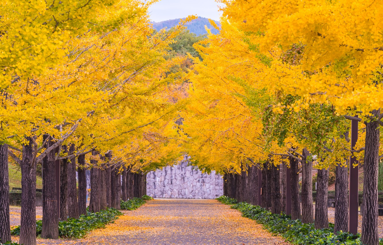Фото обои осень, листья, деревья, парк, colorful, аллея, landscape, park, autumn, leaves, tree, alley, path, fall