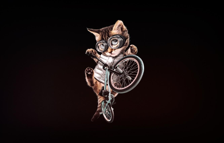 Фото обои Минимализм, Котенок, Очки, Кот, Стиль, Велосипед, Арт, Art, BMX, Style, Котёнок, Cat, Kitten, Bike, Minimalism