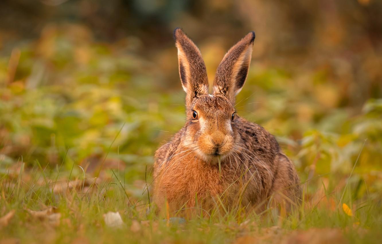 картинки про уши зайцев телефонах важна, первым