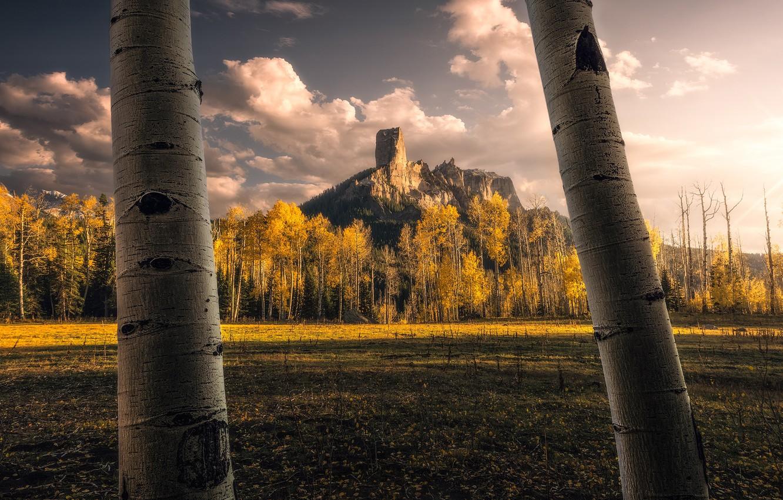 Фото обои поле, осень, небо, деревья, горы, скалы, стволы, желтые, вершина, кроны, осины
