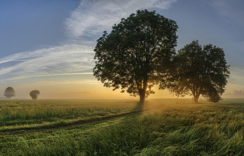 Фото обои дорога, туман, дерево, утро