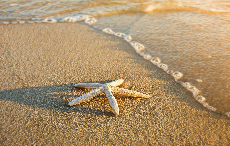 Фото обои песок, море, пляж, лето, звезда, summer, beach, sea, sand, starfish