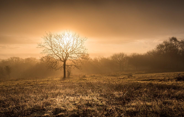 Фото обои ночь, природа, туман, дерево