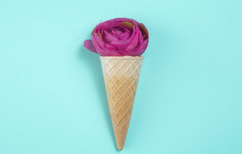 Фото обои фон, голубой, розовая, роза, бутон, вафельный рожок