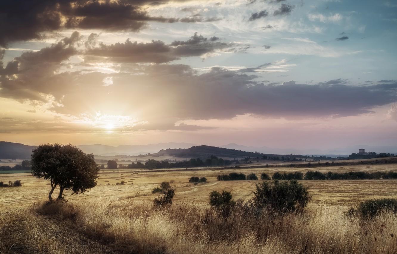Фото обои поле, лето, закат