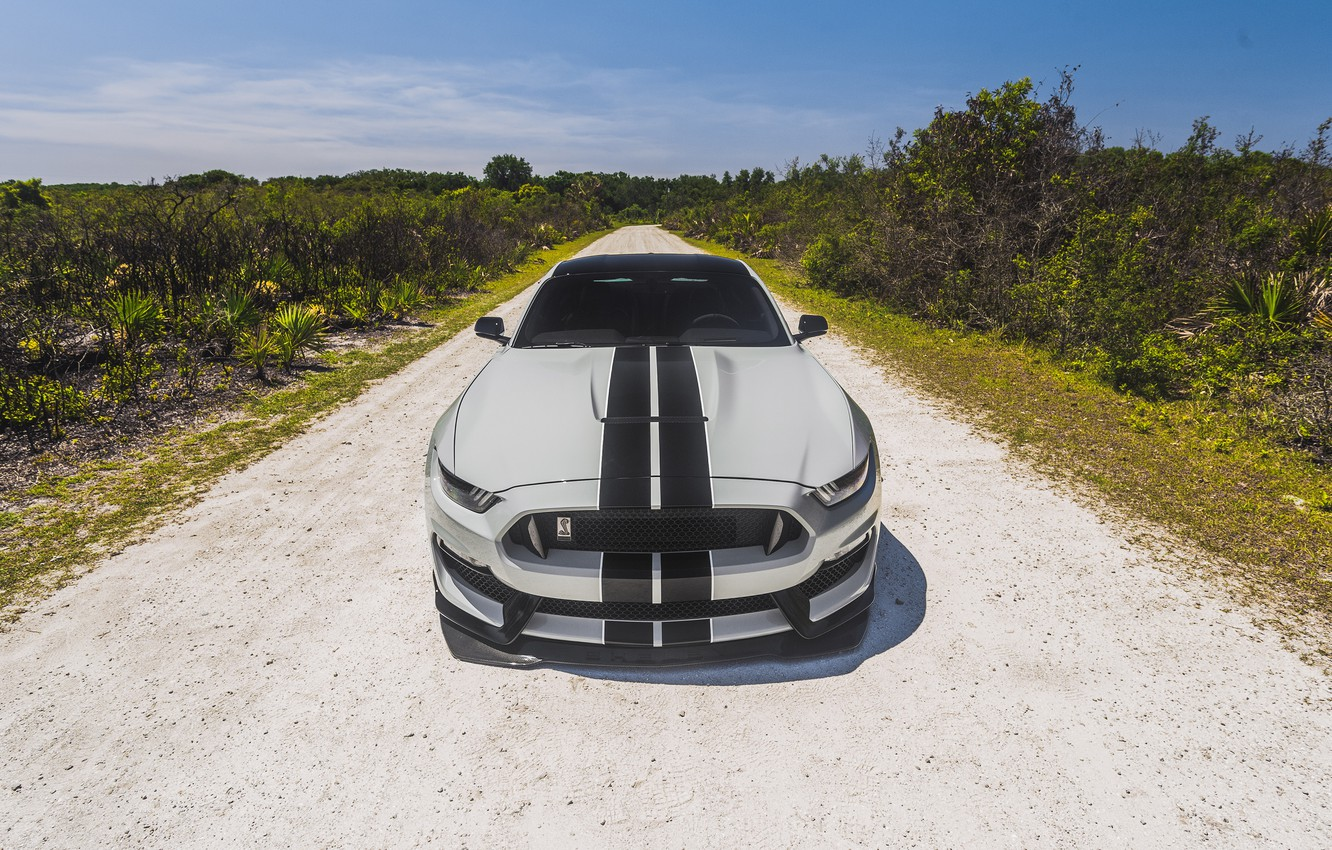 Фото обои Mustang, Ford, Shelby, Ford Mustang, GT350, Ford Mustang Shelby GT350, Shelby GT350