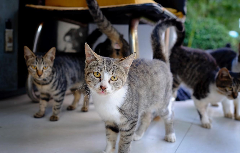 Фото обои кошки, банда, полосатые