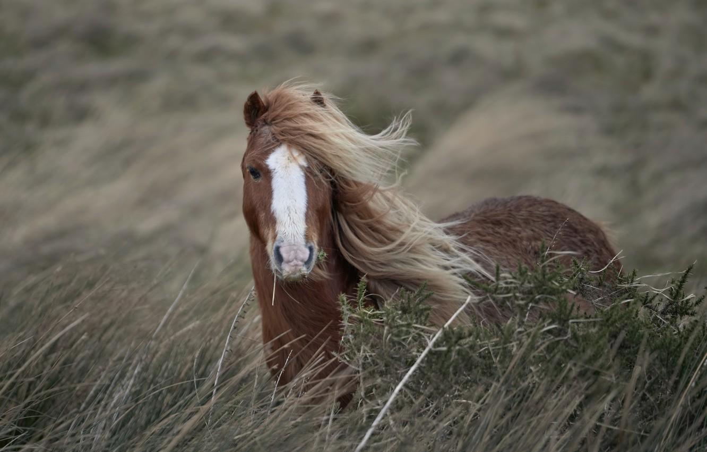 Фото обои природа, конь, ветер