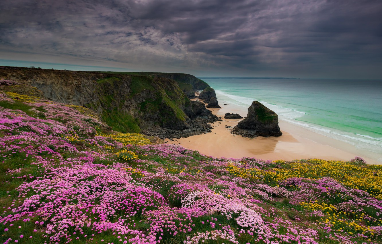 было очень цветы на побережье фото знаков зодиака