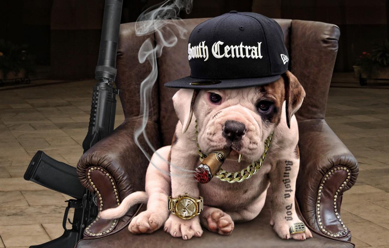 Фото обои друг, собака, гангстер