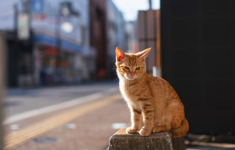 Фото обои дорога, кошка, кот, свет, город, поза, котенок, стена, улица, здания, рыжий, котёнок, тротуар, сидит, боке, …