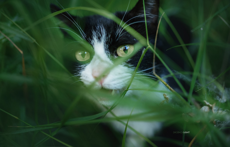 Фото обои кошка, трава, кот, Alexander Drobkov-Light