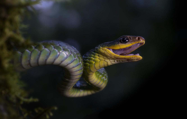 всех картинки рисунки фото змей посещения