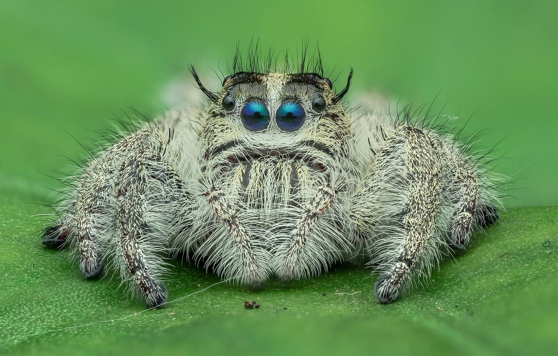 Обои насекомое, паук, лист. Макро foto 13